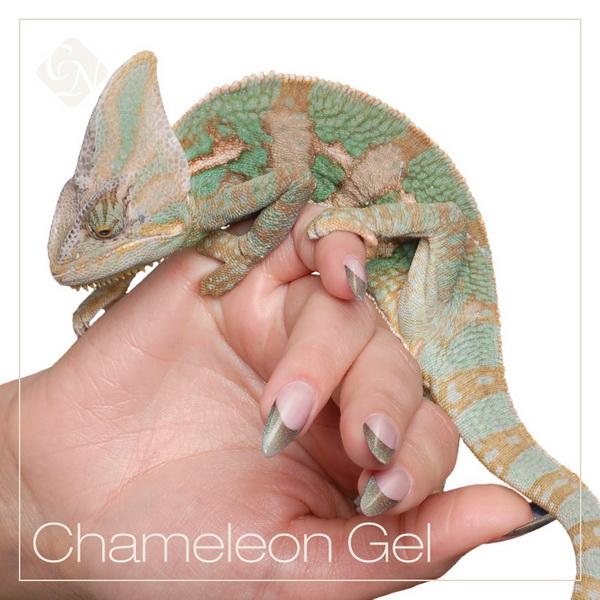 Chameleon RAINBOW zselék - önmagában, különböző szögekből nézve változó